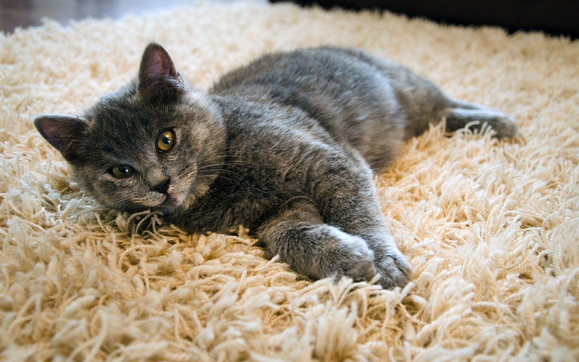 Cute cat lying on a plush carpet